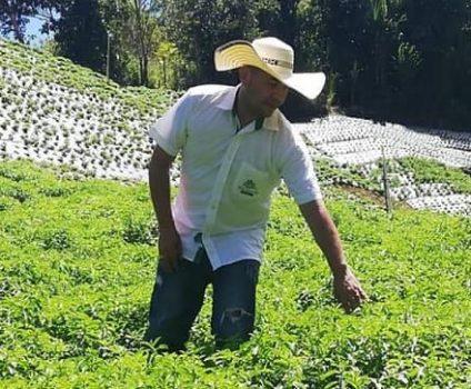 plantation de stévia - stevialite- colombie 2 (2)